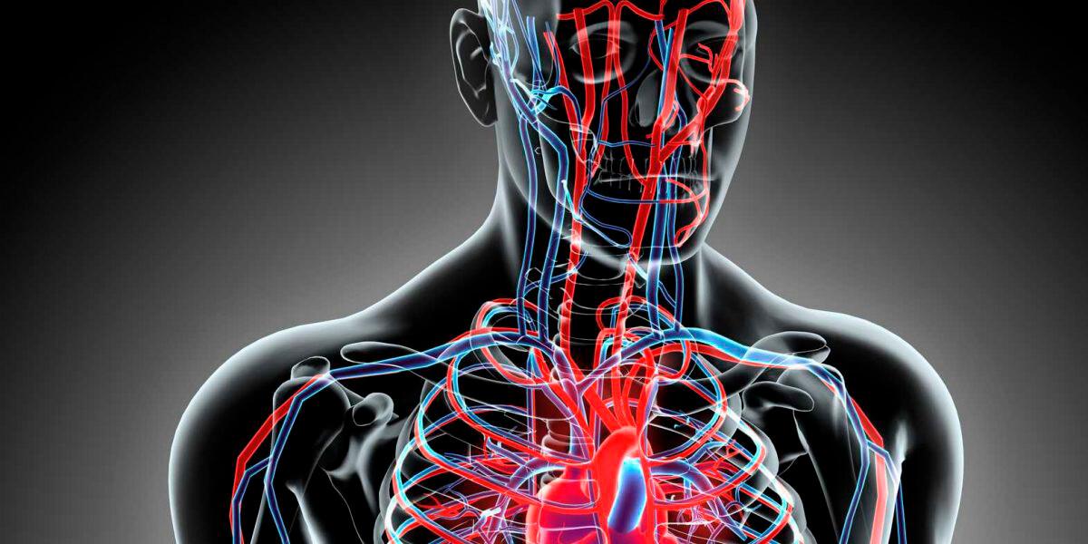 Vascular Studies